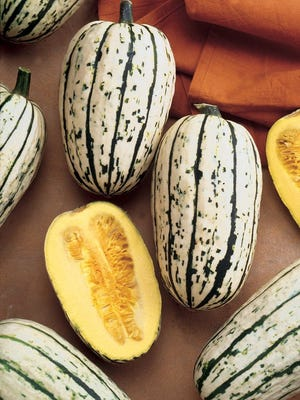 Delicata is a striped oblong fruit. It lasts less than other squashes in storage at about 2 and a half months.