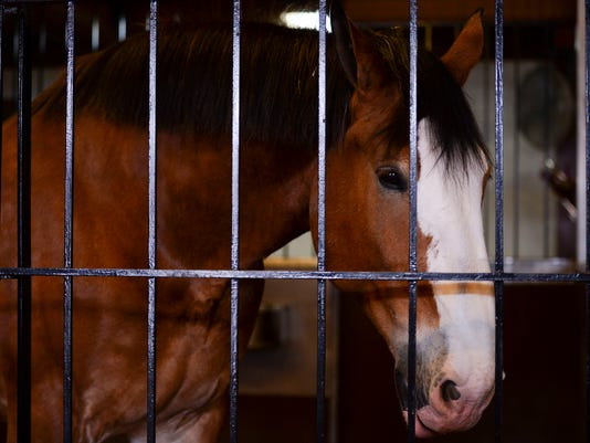 FTC0302_Clydesdales