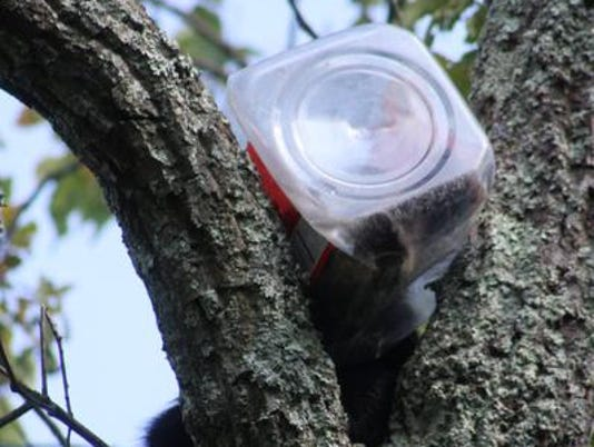 Cub in Cookie Jar.BEARINTREE