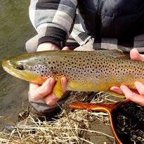 Harris: Memorable trout fishing outing with Bruce Ristow
