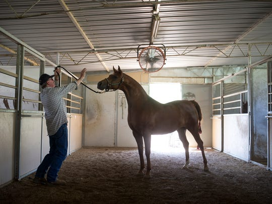 JD Smith works with one of his horses at his Cave Creek