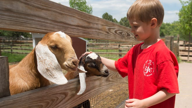 Bradley Hennings, 5, pets a pair of baby goats at Lee Martinez Farm on Wednesday, May 23, 2018.