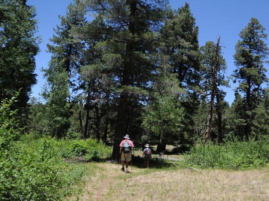 The trek to Bismarck Lake in the San Francisco Peaks north of Flagstaff weaves in and out of pine and aspen forest.