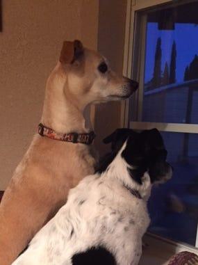 Gia & Zeus