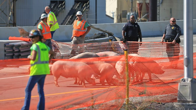 A semi tractor trailer from B&B Farms of Indiana overturned with 150 pigs Wednesday morning on the northbound Interstate 65 to Interstate 64. Several pigs died; the driver suffered minor injuries and was taken to University Hospital. Louisville Metro Police fatal investigator Donnie Smith says speed wasn't a factor in the crash.