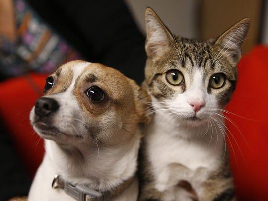 Roxy (left) and Oscar visit the newsroom in Phoenix,