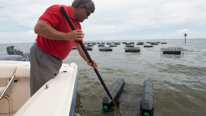 Don McMahon, founder of Pensacola Bay Oyster Co., checks on the health of an oyster colony in Escambia Bay in this file photo.