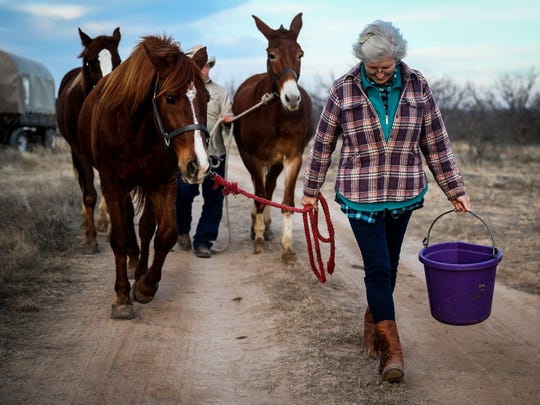 Becky Searle walks her horses to get water on the first night of the Santa Fe Trail Ride and Wagon Train Friday, Jan. 26, at U Ranch north of Sterling City.
