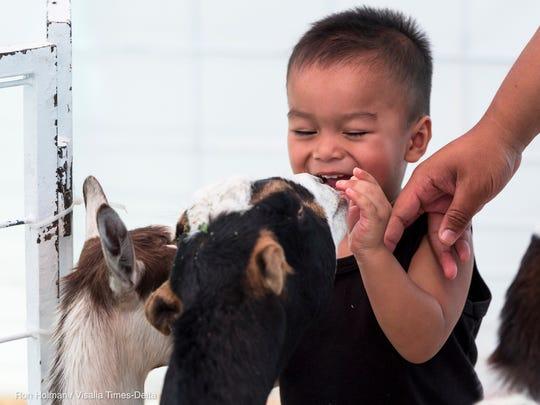 Leila Permed, 2, of Tulare feeds the goats in the petting zoo on kids day at theTulare County Fair on Wednesday, September 13, 2017.
