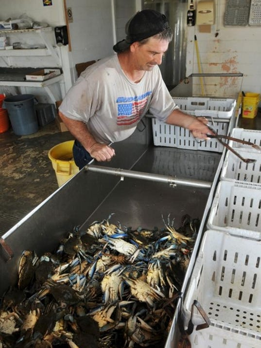 Employee Roger Smith sorting blue crabs just brought in by Joe Judge, at Clayton's Seafood Market, located on U.S. 1