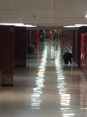 A bear wandered the halls of Bozeman High School in Montana on Wednesday.