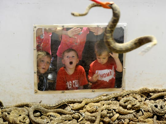 Kids watch as snakes are moved around the pit during the 59th annual World's Largest Rattlesnake Roundup on Saturday, March 11, at the Nolan County Coliseum in Sweetwater.