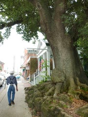 The historic Jim Bowie Oak in downtown Opelousas is more than 350 years old.