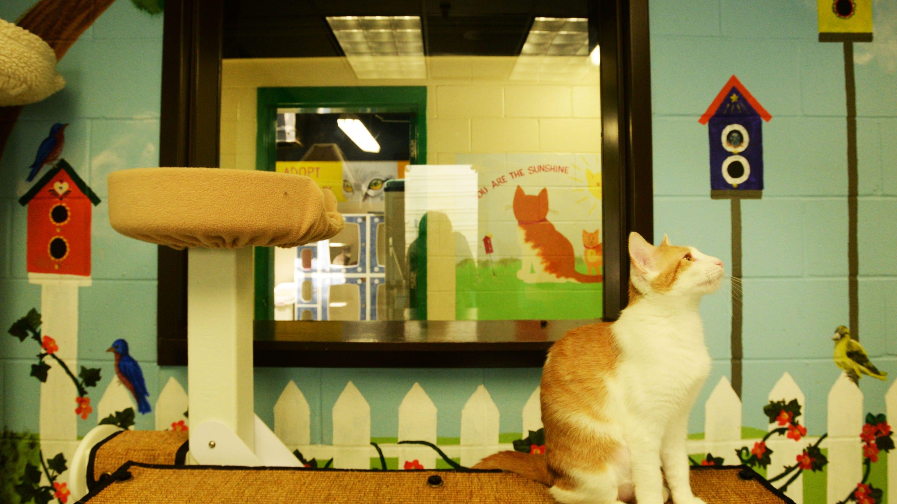 Caddo Animal Shelter Cats