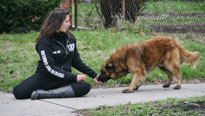 Detroit Dog Rescue Co-Founder Monica Martino with a homeless dog on the west side of Detroit. The dog's owner was later found by DDR.