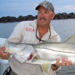 Snook, like this one released at the St. Lucie Inlet in Stuart, will be the center of discussion at the 2016 Snook Symposium on Jan. 13 at the Caribe Royal Hotel near Walt Disney World, sponsored by the Florida Fish and Wildlife Conservation Commission.