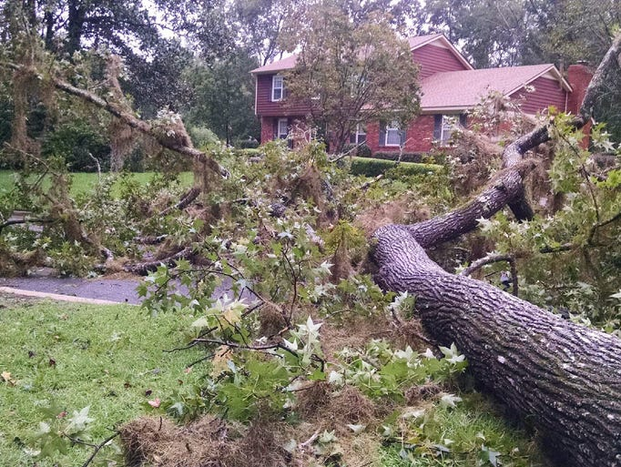 A huge tree that fell across Fogarty Drive during Hurricane