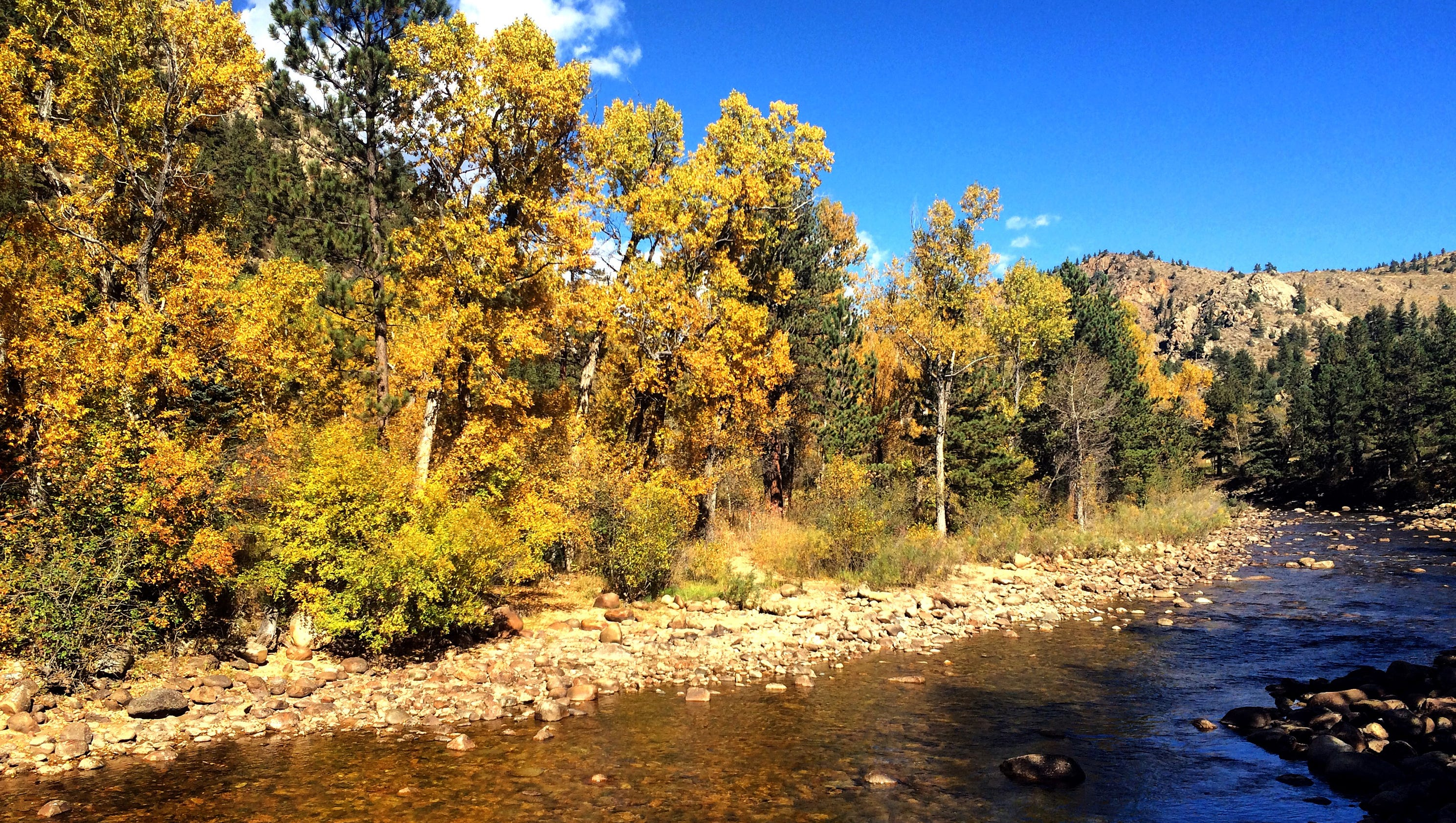searching for and finding fall in the poudre canyon - Poudre Color Run