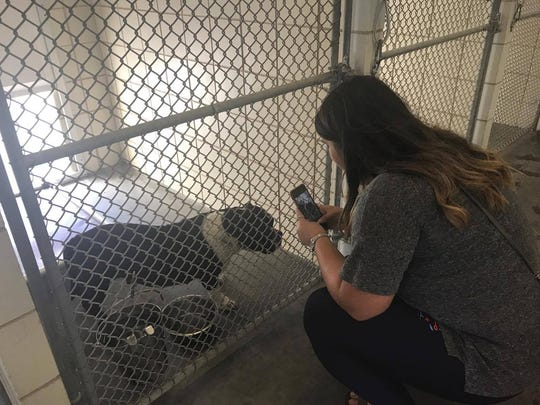 Lisa Montez takes photos of a dog at the Corpus Christi Animal Care Services Shelter May 2, 2017.