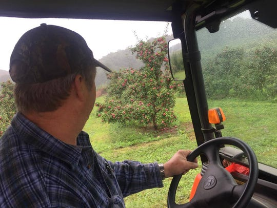 Fred Wilklow inspects the apples Sunday. The farm has