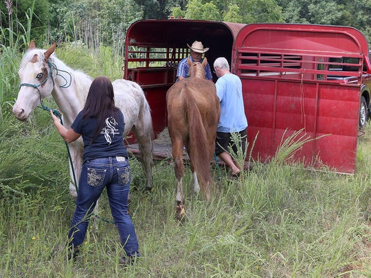 Redemption Road Rescue staff members load the horses into a trailer in Reagan, Tenn., on Wednesday, Sept. 2, 2015.