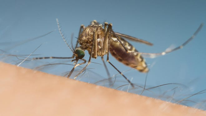 The first cases of West Nile virus have been reported in Lyon County.