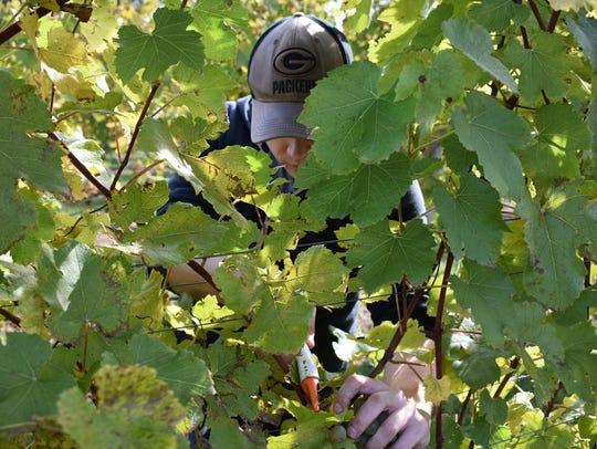 USA TODAY NETWORK-Wisconsin wine columnist Jordan Tilkens