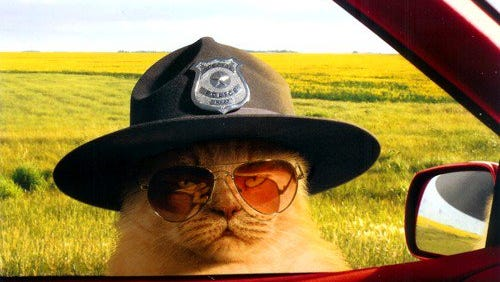 Troy police said they're getting a police cat.