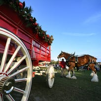 Budweiser Clydesdales, Express Clydesdales to make several hitch stops on Treasure Coast