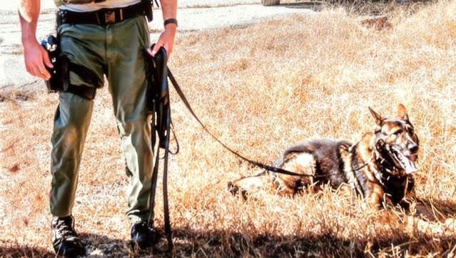 Anderson County K-9 Hyco was shot and killed on Oct. 21.