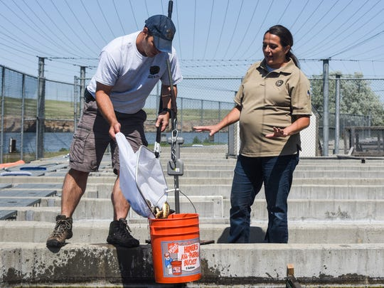 Kqyn Kuka helps Matt Wipf collect data on the Giant Springs Hatchery's trout.