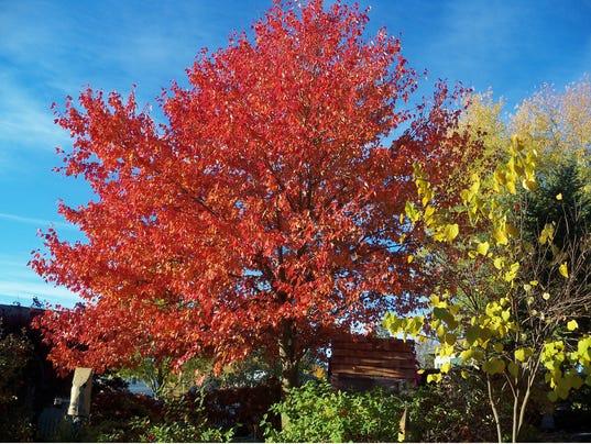 HES-SUB-012616-Trees.jpg