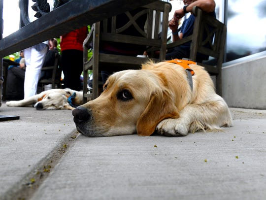 Steve and Pia Kuhl's dogs, Charlie and Benji, gave