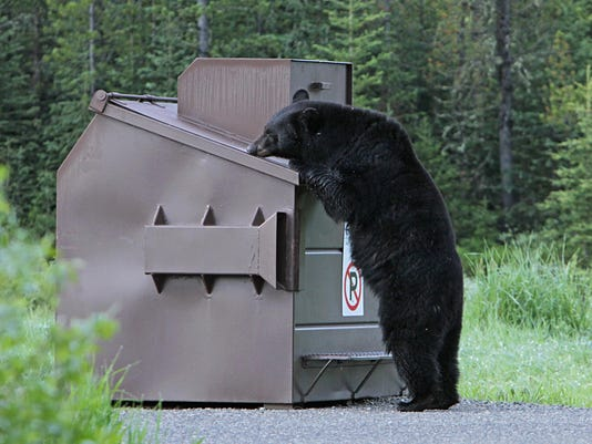 Black Bear and Bear-Proof Dumpster_National Park Service