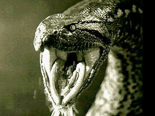 PETA: Don't show man 'eaten alive' by snake