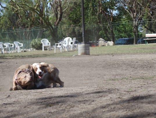 Sun City Palm Desert Dog Park