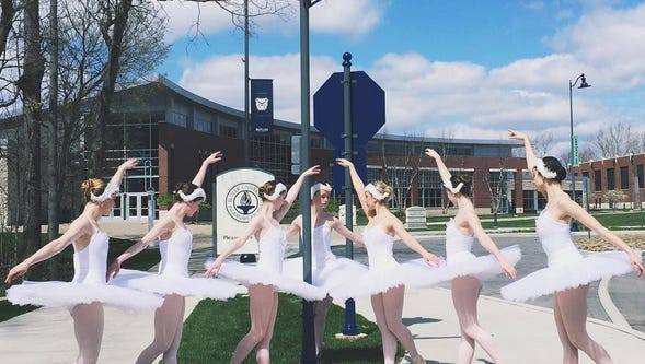 Swans strike a pose on Butler University's main drag.