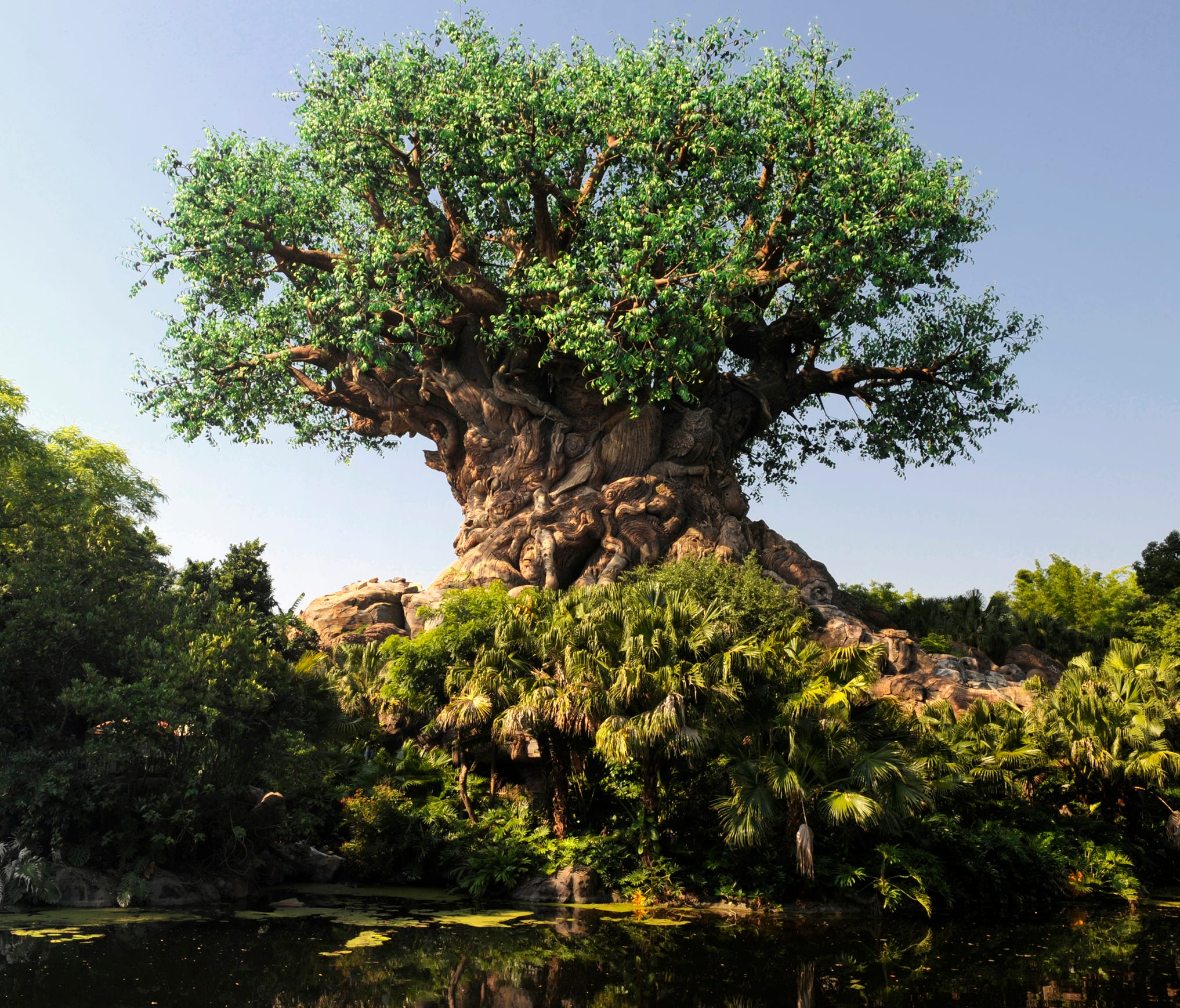 Disney's Animal Kingdom turns 20 years old on April 22, 2018. The park opened on Earth Day in 1998.