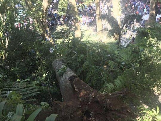 Portugal Fallen Tree (2)