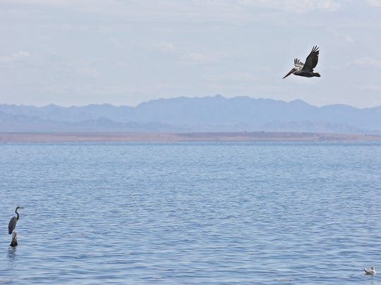 Birds fly over the Salton Sea.