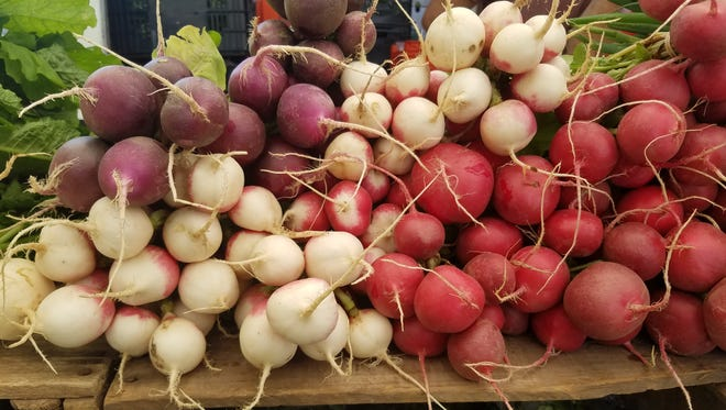 Radishes of many colors make for a fresh treat in early fall.