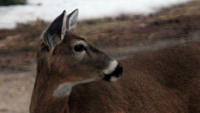 A deer in 2011.