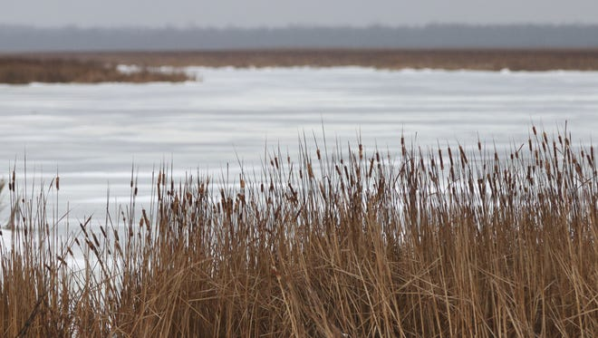 Cattails line the edge of Broughton Marsh Park Tuesday January 10, 2017 in Elkhart Lake.