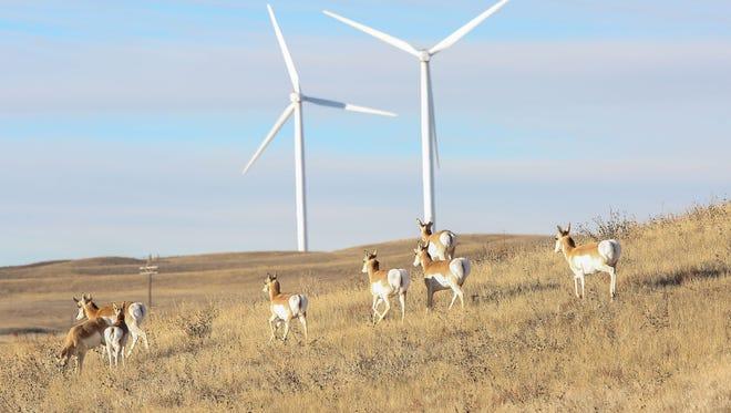 Antelope pass through Duke Energy's Happy Jack wind farm near Cheyenne, Wyoming on Dec. 6, 2016.
