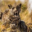 NatGeo's 'Savage Kingdom': Cat-eat-cat world