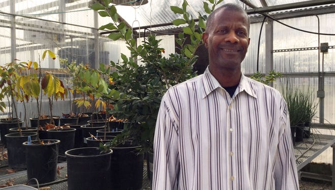 Rolston St. Hilaire, New Mexico State University Plant and Environmental Sciences Department Head and Professor, stands in a greenhouse at the Fabian Garcia Science Center. St. Hilaire developed and patented the Acer grandidentatum 'JFS-NuMex 3,' a type of Bigtooth maple tree.