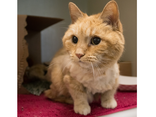 The Des Moines Register and the Animal Rescue League of Iowa are excited to introduce you to Missy!