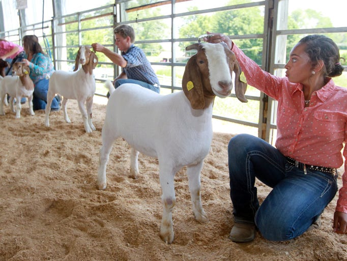 Rachel Utz (right), 16, holds her goat, Monroe, during the goat show at the Boone County 4-H and Utopia Fair.