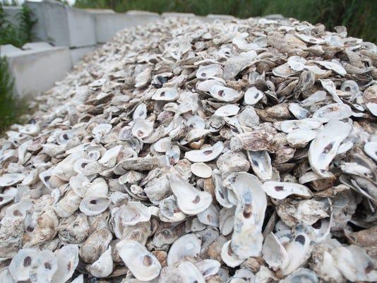 shells (1 of 1)