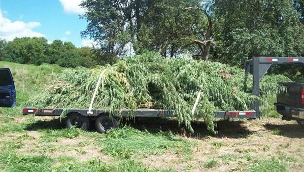 The Lawrence County Sheriff's Office said they seized more than 3,000 marijuana plants from an area southwest of Mt. Vernon